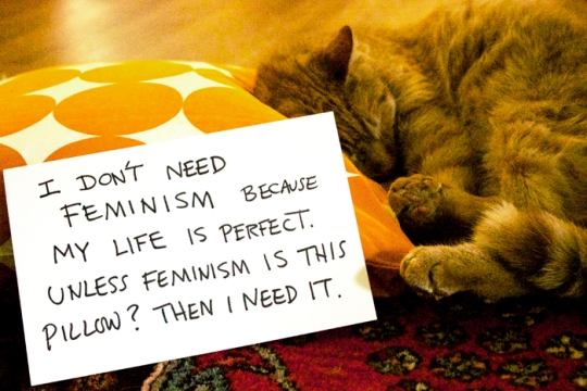 when I get mad, I just visit the Confused Cats Against Feminism tumblr and then I feel better