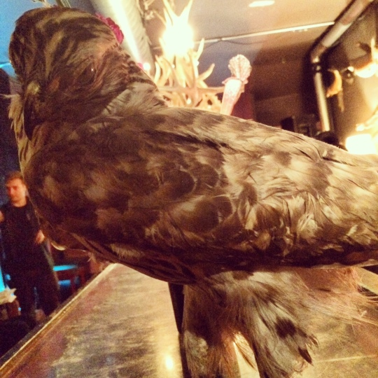 another pretty bird on set