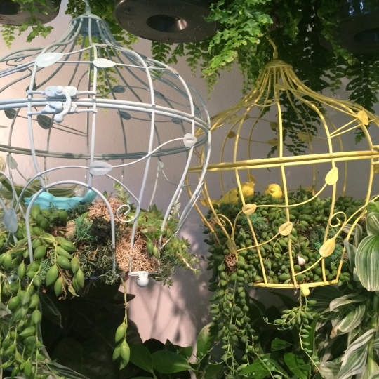 birdcages at the location